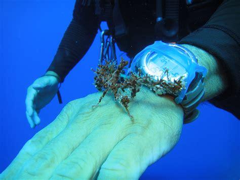 decorator crab at the aquarium tranquility bay resort