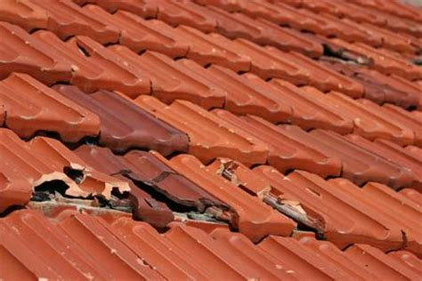 roof a cide 174 roof cleaning for communities 800 806