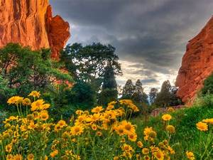 Spring Flowers In The Garden Of The Gods In Colorado