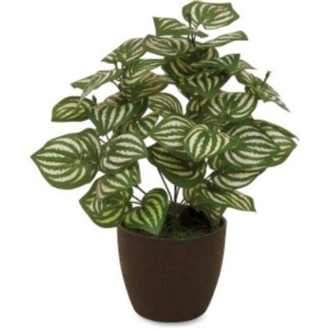 light houseplants   easy  maintain   impossible  kill home