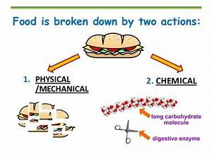 Chemical Digestion Vs Mechanical Digestion  U2013 Biology And