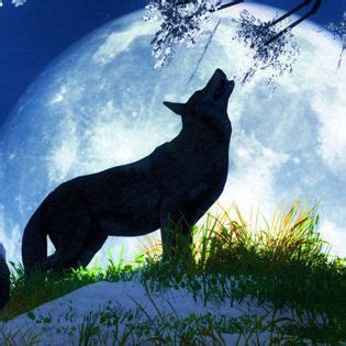 wolf howl full moon facebook cover nature