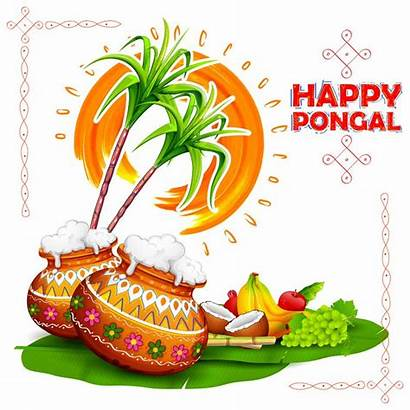 Pongal Happy Background Wishes Greetings Greeting Recipes