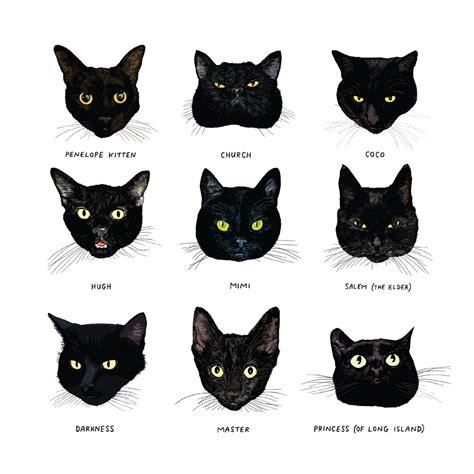 open book  black cats   alike chronicle books