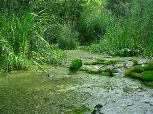 Algen Im Gartenteich : algen im gartenteich tipps zur algen bek mpfung und ~ Michelbontemps.com Haus und Dekorationen