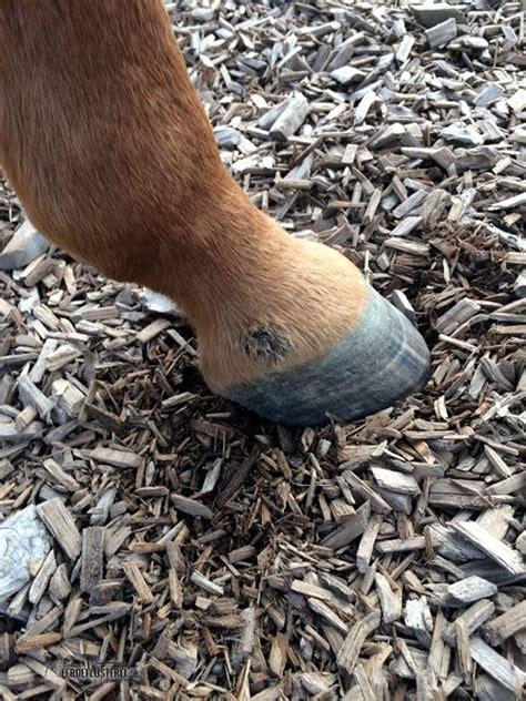 pferd mauke vorbeugen behandeln helfen