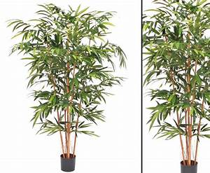 Bambus Als Zimmerpflanze : bambus pflege zimmerpflanze bambus pflege bambus buddhas bauch bambus bambus pflanzen der ~ Eleganceandgraceweddings.com Haus und Dekorationen