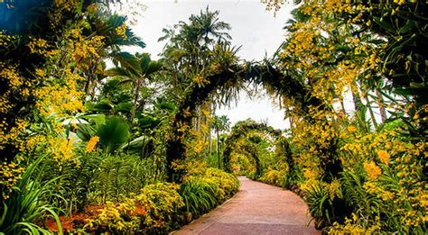 singapore botanic gardens singapore botanic gardens oasis travel in singapore