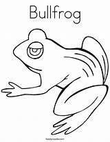 Coloring Bullfrog Tadpole Frogs Frog Pages Template Outline Drawings Templates Pollywog Hibernate Noodle Tracing Twistynoodle Favorites Login Change Twisty 76kb sketch template