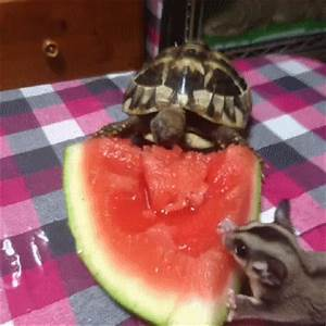Watermelon GIF - Find & Share on GIPHY