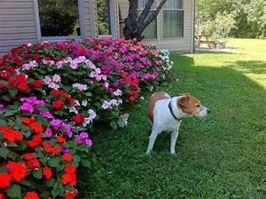 modele de parterre de fleurs obasinccom With ordinary idee deco jardin avec cailloux 8 parterre de fleur avec cailloux obasinc