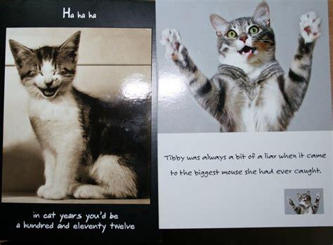 cute cat birthday quotes quotesgram