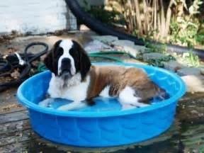 Hard Plastic Dog Swimming Pools