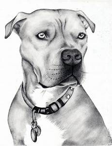 Pitbull Dog Drawing Face