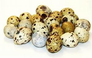 Скорлупа яиц от остеохондроза