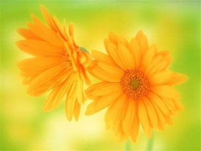 Yellow Flowers Names Meaning Amazing Wallpapers Mean