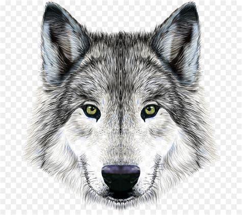 imposing wolf png    transparent
