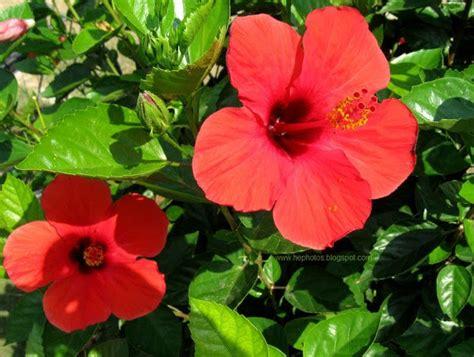 summer flowers  stunning blooms perfect   season