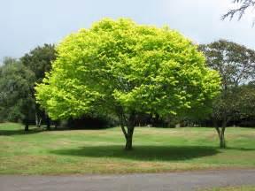 file bright green tree waikato jpg