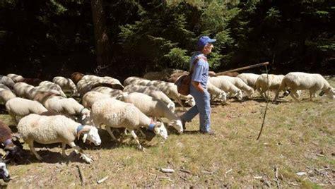 Le Berger Ls by Un Pacte Pastoral Pour Un Patrimoine Commun Espaces Naturels