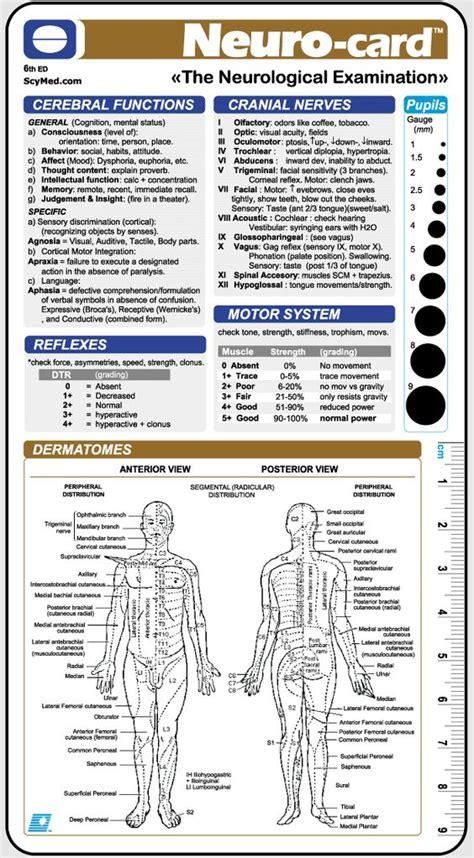 neurological template neurological examination neurological examination healthcare