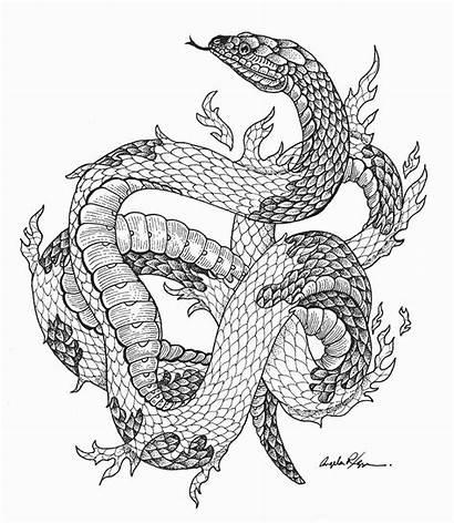 Snake Shedding Skin Wolf Drawing Challenge Rizza