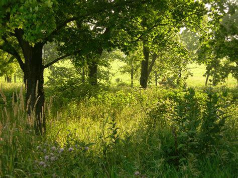 Farm Kitchen Ideas - two men and a little farm inspiration thursday peaceful trees