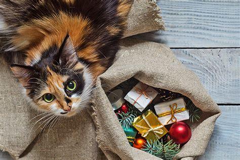Weihnachtsgeschenk Für Katze