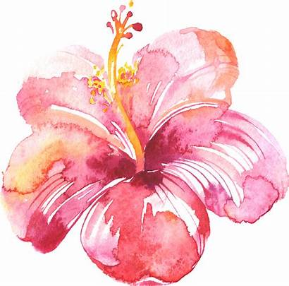 Watercolor Flowers Projects Water Painting Floral Drawing