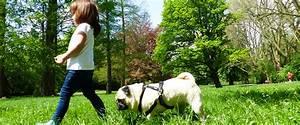 Haustiere Für Kinder : warum haustiere f r kinder wichtig sind snyggis familienblog ~ Orissabook.com Haus und Dekorationen