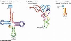 Bio 210 Study Guide  2013-14 Diefenbacher