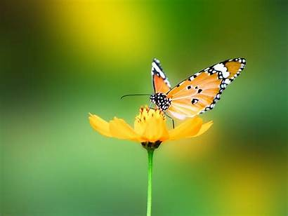 Butterfly Nature Wallpapers Animals Mobile Desktop Backgrounds