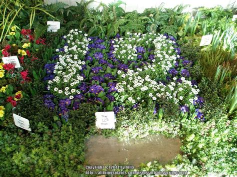 seattle flower and garden show pacific northwest gardening forum seattle flower and