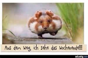 Bilder Zum Wochenende : aus dem weg ich sehe das wochenende freizeit hamster niedlich s wochenende lustige ~ Udekor.club Haus und Dekorationen