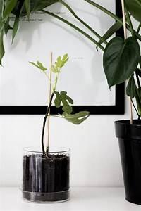 Anthurie Im Wasser : 574 besten plants are friends bilder auf pinterest botanik te quiero und zimmerpflanzen ~ Yasmunasinghe.com Haus und Dekorationen