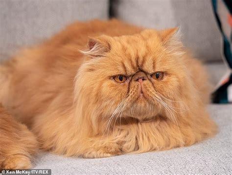 This Morning Viewers Heartbroken As Grumpy Cat Trend