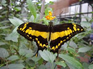 Jardins Des Papillons Hunawihr Avis by Jardin Des Papillons Hunawihr Les Avis Sur Jardin Des