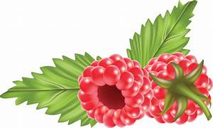 Raspberry PNG images free pictures download