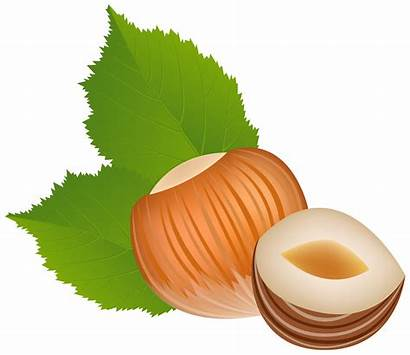 Hazelnut Clipart Clip Nuts Transparent Nut Cartoon
