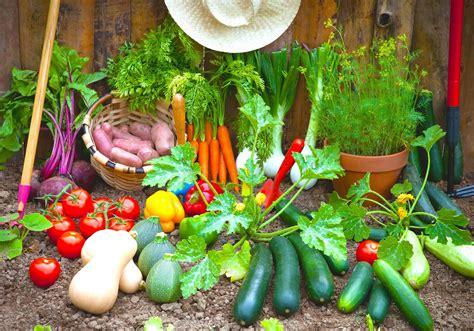 vegetable home garden plans  beginner gardener roy