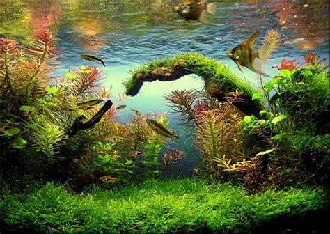 canape relax electrique ikea les plantes d aquarium 28 images index illustr 233 de