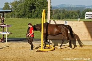 Podest Pferd Selber Bauen : sony dsc swiss horse agility horse agility schweiz ~ Yasmunasinghe.com Haus und Dekorationen