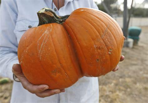 Best Pumpkin Patch Richmond Va 100 best pumpkin patch in santa clarita 7 best