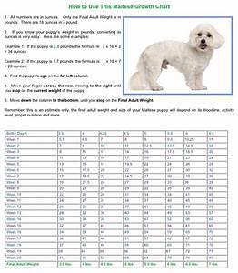 Beagle Dog Growth Chart