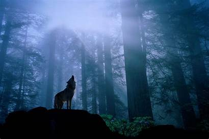 Wolf Howling Pack