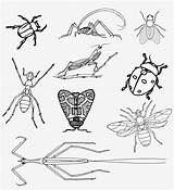 Bugs Insects Coloring Insect Realistic Clipart Beetle Vector Bee Fly Minibeast Ant Illustrations Transparent Donate Ladybug sketch template