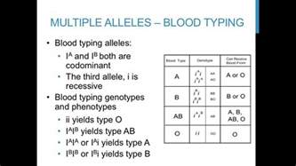 problem solving in fractions with answer blood type punnett square worksheet delibertad