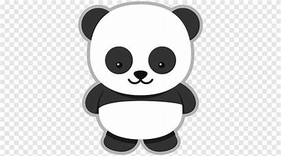 Panda Cartoon Giant Bear Animals Pngegg