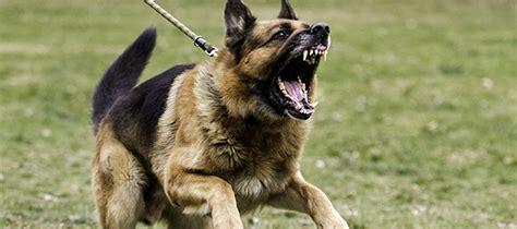 dog attacks mosman council
