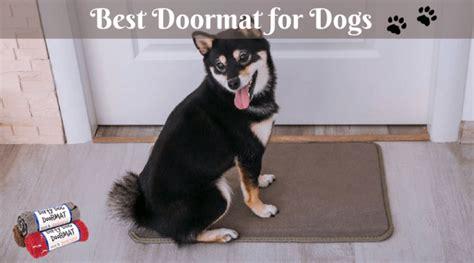 Best Doormats For Dogs best doormat for dogs 2019 reviews